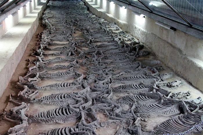 Mormantul ducelui - schelete de cai