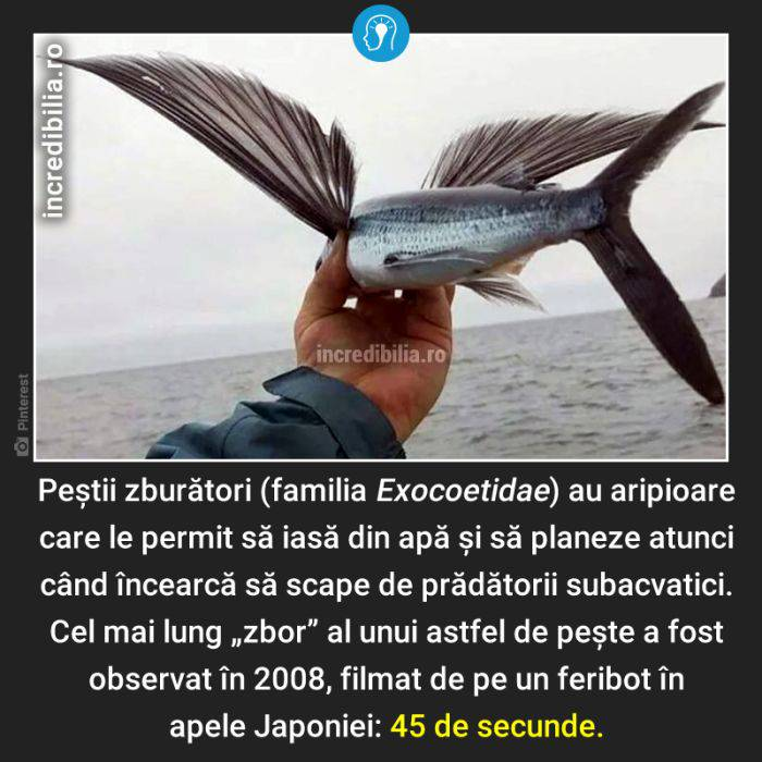1205. pestii zburatori_5_red_compressed