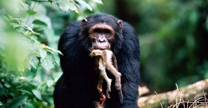 7 dintre cei mai răi tați din lumea animalelor FEATURED_compressed