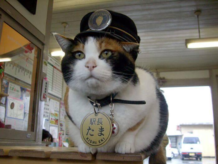 Pisica Tama 02