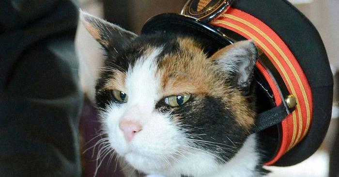 Tama, pisica șef de gară care a salvat o stație de la faliment FEATURED_compressed