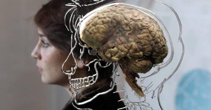 5 mituri despre creierul uman care sunt larg răspândite și astăzi FEATURED_compressed