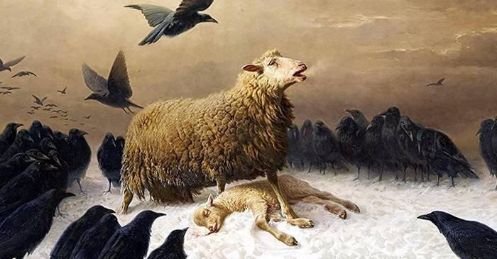 Marea Panică a Oilor din 1888, un fenomen bizar petrecut în Anglia featured_compressed