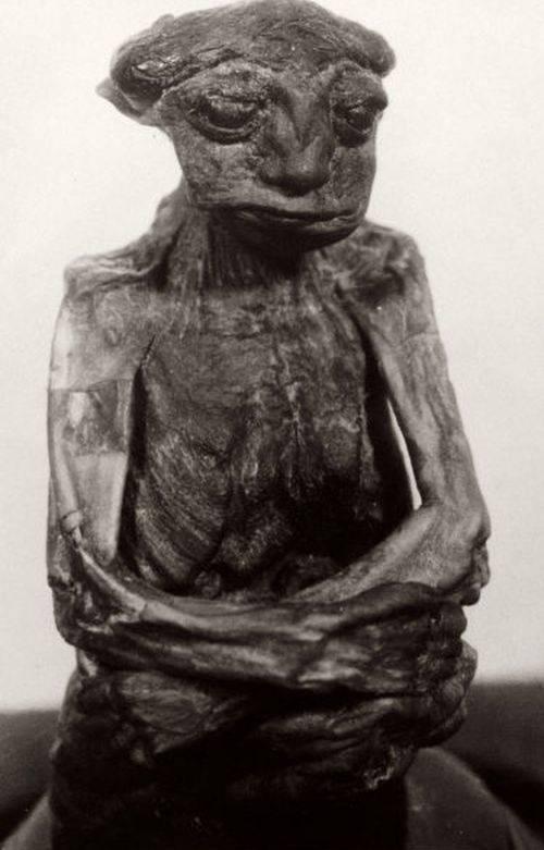 Mumia Pedro