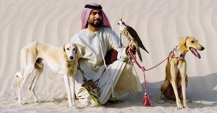 Saluki, câinii ultrarapizi folosiți la vânătoarea de gazele featured_compressed