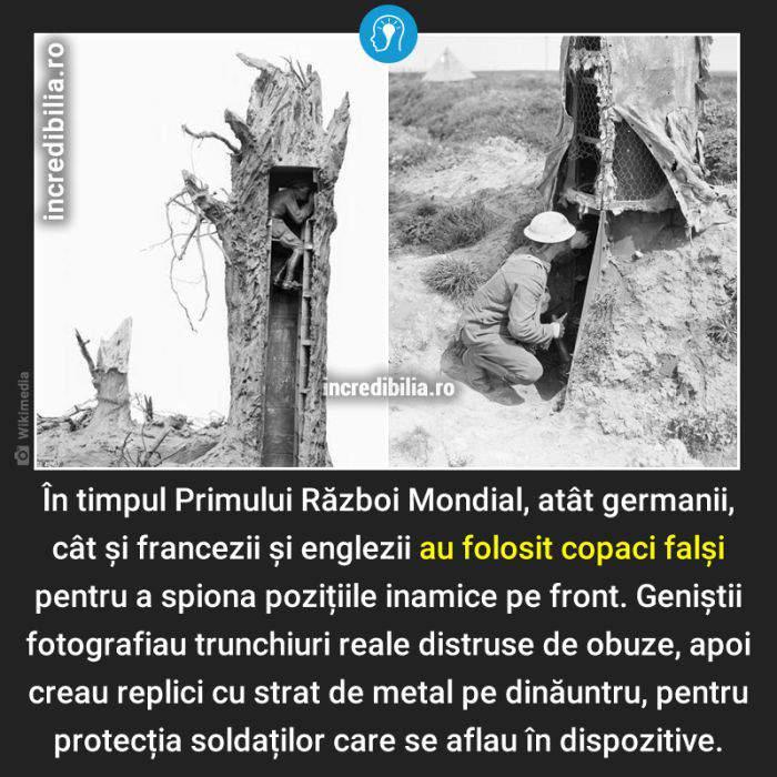 1406. copacii falsi din primul razboi mondial_104_red_compressed