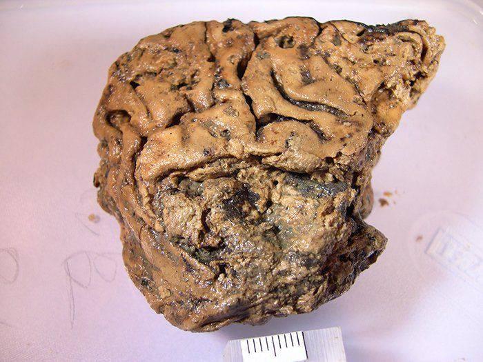 Creierul din Heslington
