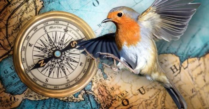 """Descoperire revoluționară """"Busola"""" cu ajutorul căreia se orientează păsările migratoare"""
