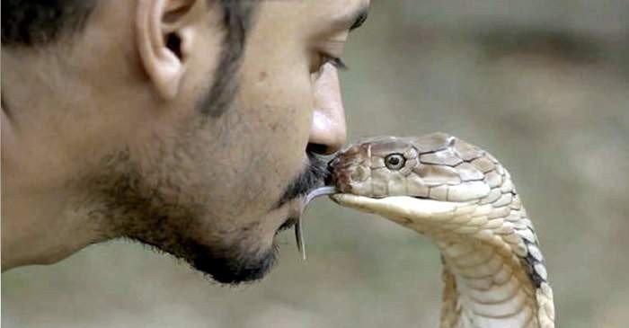 Mirosul stereo Adevăratul motiv pentru care șerpii au limba bifurcată