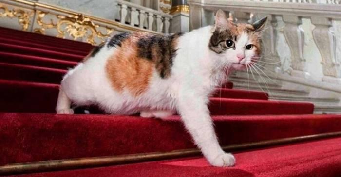 """Pisicile de la Muzeul Ermitaj Echipa de protecție împotriva șoarecilor cu """"gust"""" artistic"""