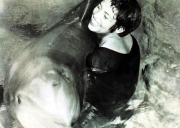 7. peter, delfinul care s-a sinucis