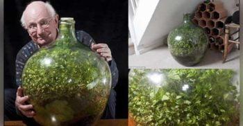 A sigilat o planta intr-o sticla acum 57 de ani. Astazi rezultatul este uluitor