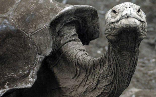 Animale disparute - testoasa gigant