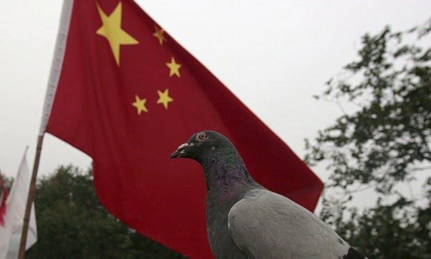 Armata chineza porumbei