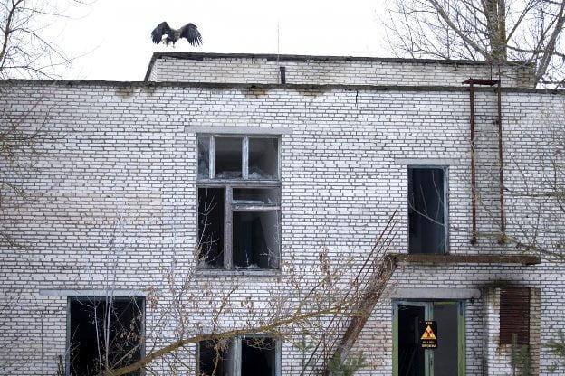 Cernobil - Vultur