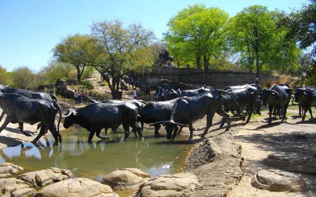 Cireada de vaci