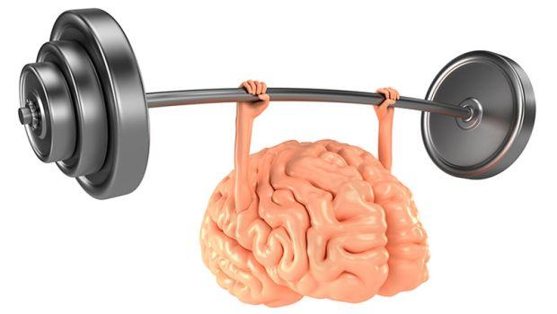 Creierul uman - circumvolutiuni