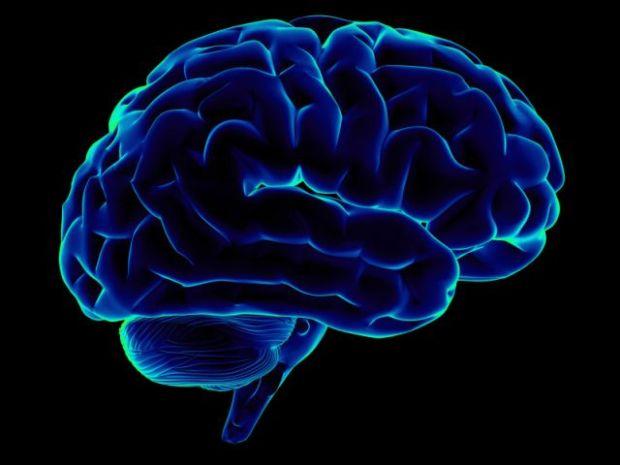 Creierul uman - grasime