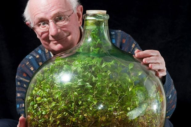 David Latimer - the plant in glass