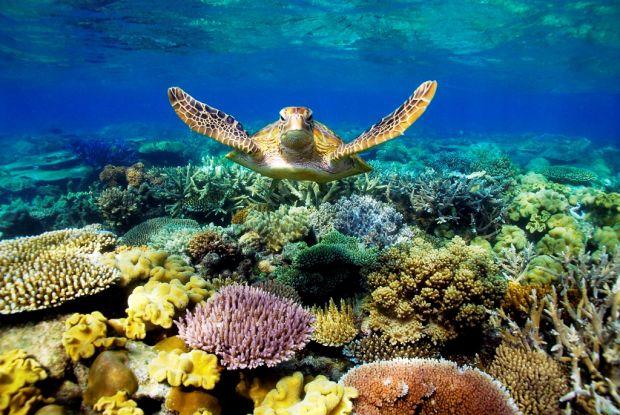 Destinatii turistice - Marea Bariera de Corali