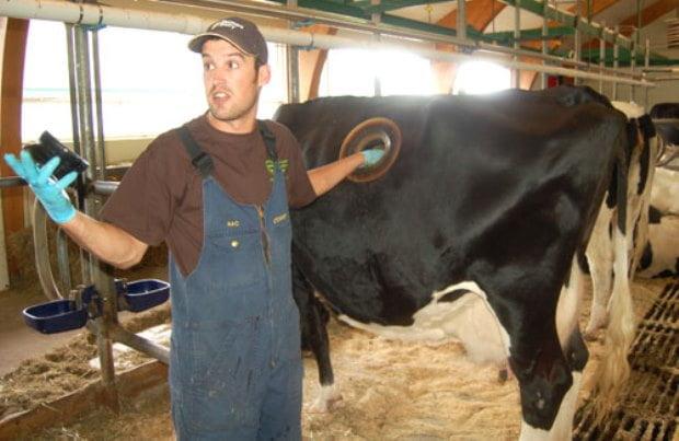 Experimente - gauri in vaci Elvetia 3
