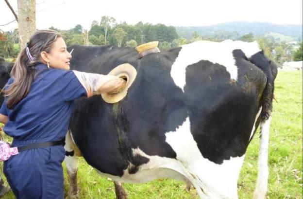 Experimente - gauri in vaci Elvetia