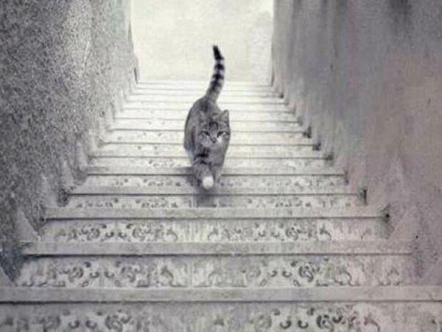 Iluzii optice - pisica