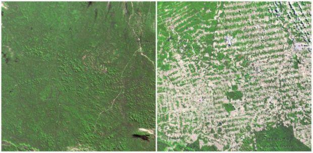 Incalzirea globala - Padurea Rondonia