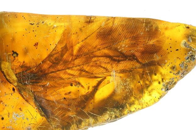Pasare preistorica - aripa