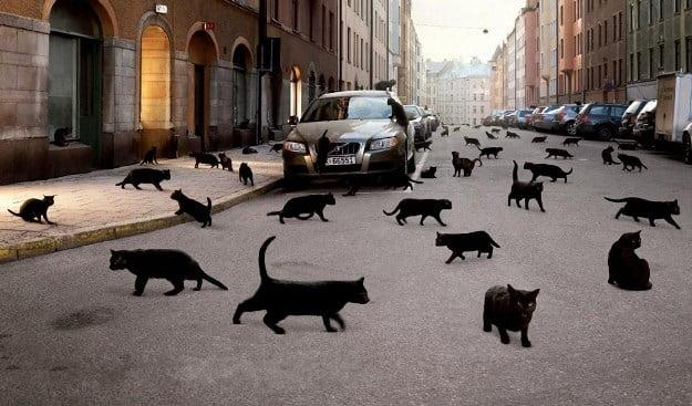 superstiții Pisica neagra