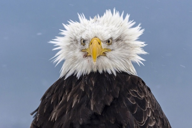 Poze frumoase - Vultur