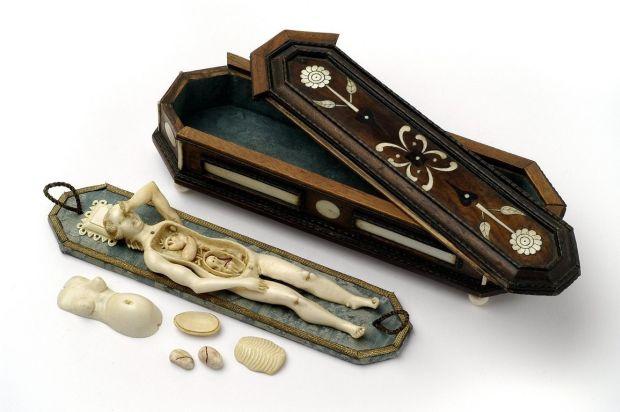 Tratamente medicale - anatomie