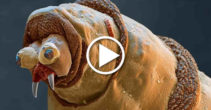 VIDEO - Universul ascuns - Lumea văzută la microscop - Featured