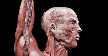 E oficial: A fost descoperit un organ nou în corpul uman