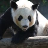 Cum și-a înșelat vizitatorii un zoo taiwanez